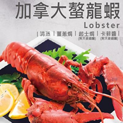 不用飛出國,來寶麗金市政店也能吃到整隻新鮮螯龍蝦